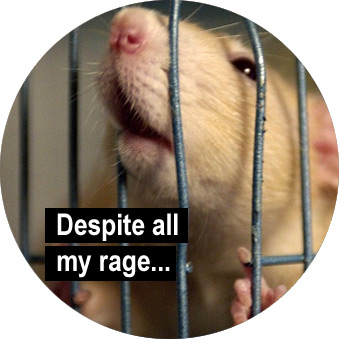 I am still a rat in a cage